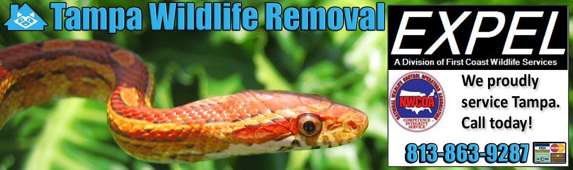 Tampa Animal Removal Wildlife Control Critter Trapping